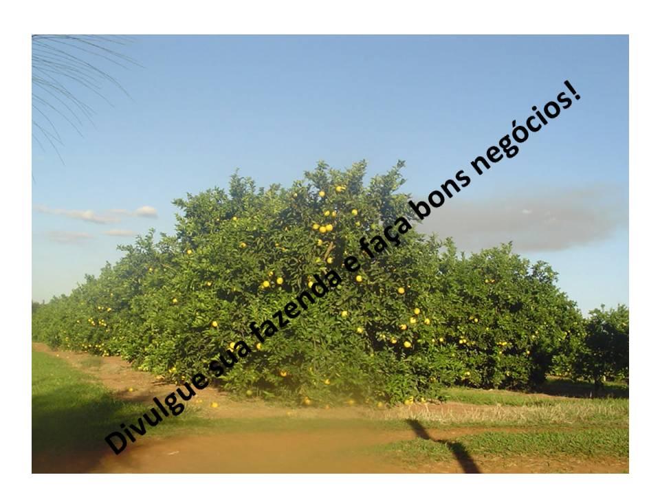 Venda - SP   Fazendas Bebedouro - SP