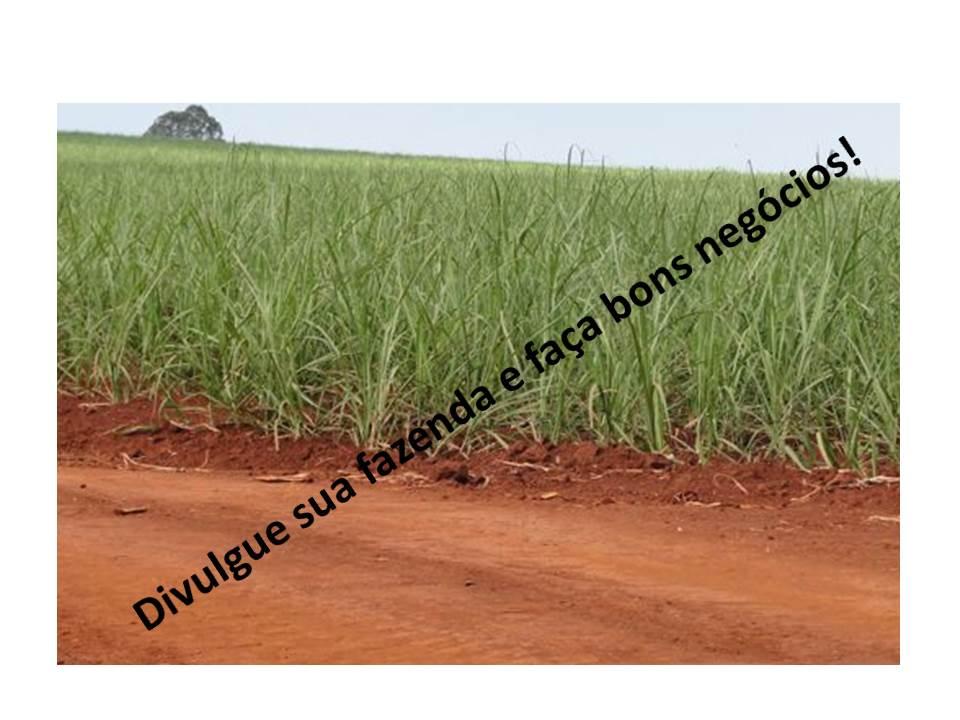 Venda - SP   Fazendas Morro Agudo - SP