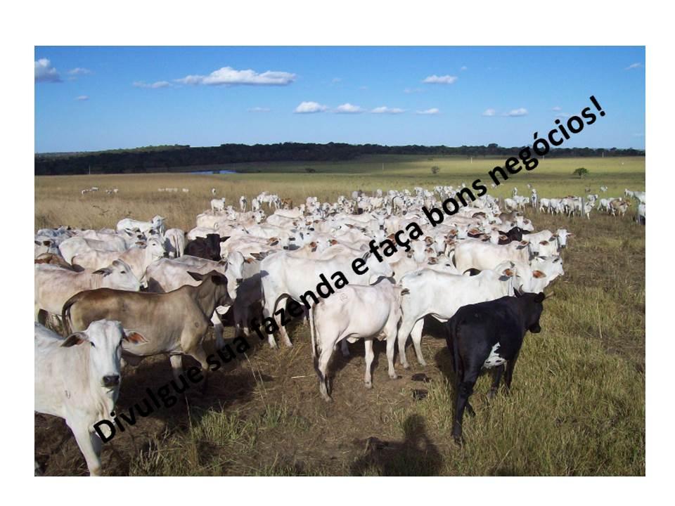 Venda - SP   Fazendas Barretos - SP