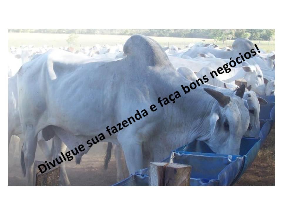 Venda - SP   Fazendas Pirajuí - SP