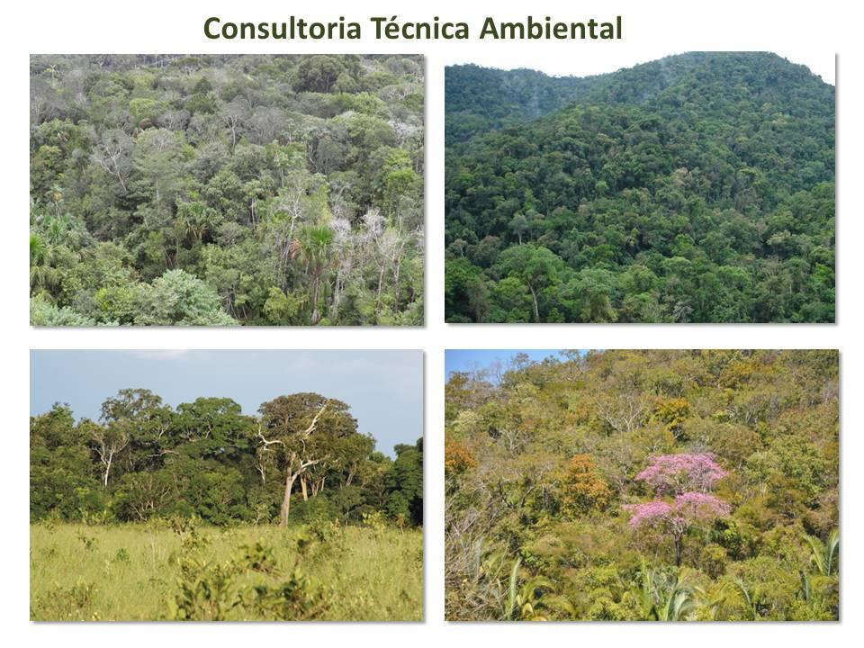 Consultoria Consultoria Ambiental       ESTADO - PR